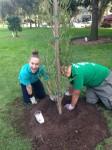 Adopt a Tree! @ Memory Row | El Segundo | California | United States